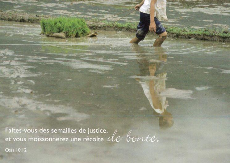 Carte postale biblique Terre Amour / Récolte bonté
